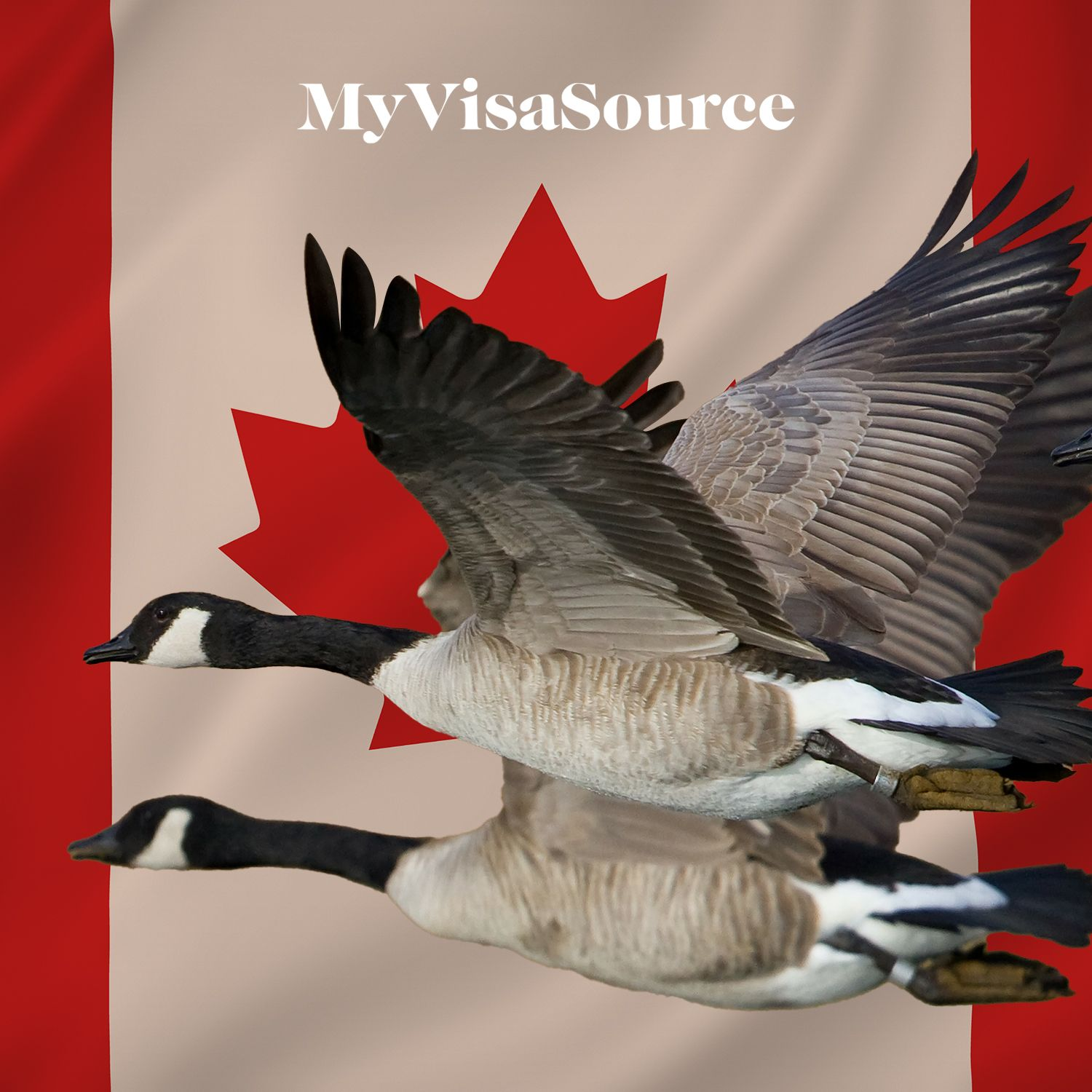flying geese with canadian flag my visa source