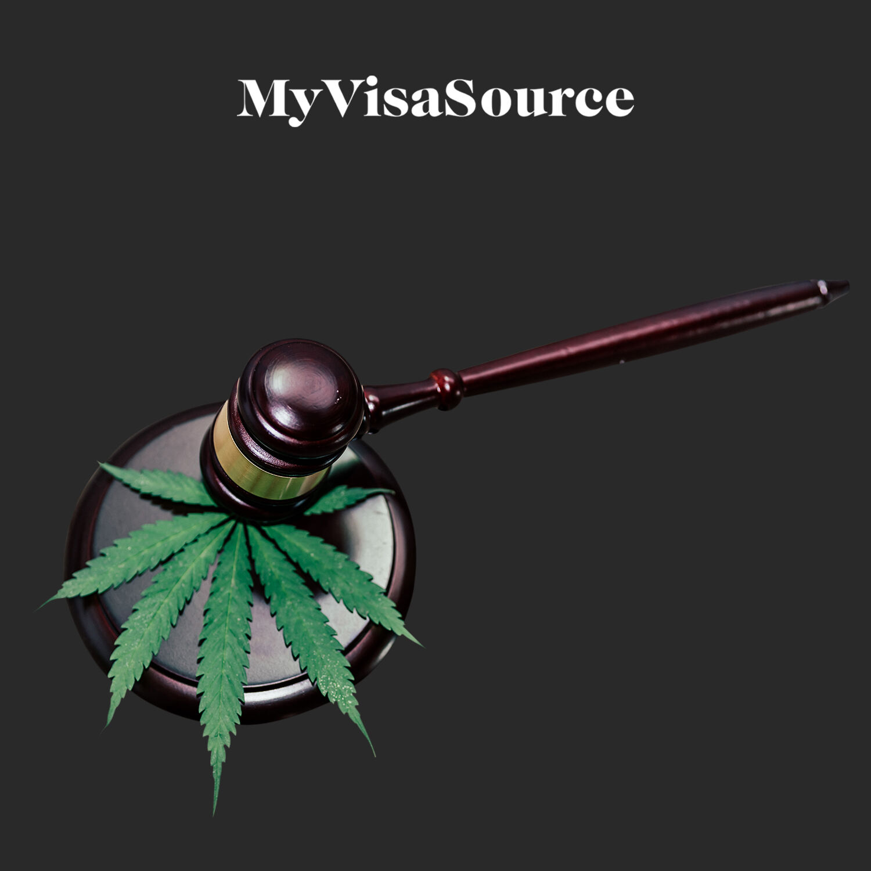 judges gavel on marijuanas leaves