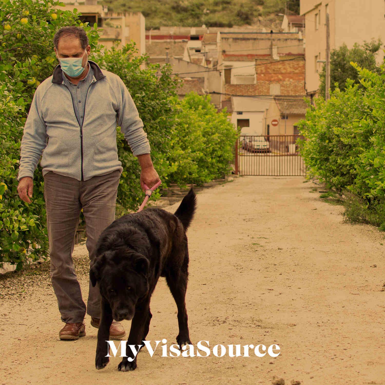 man wearing a covid mask walking his dog my visa source