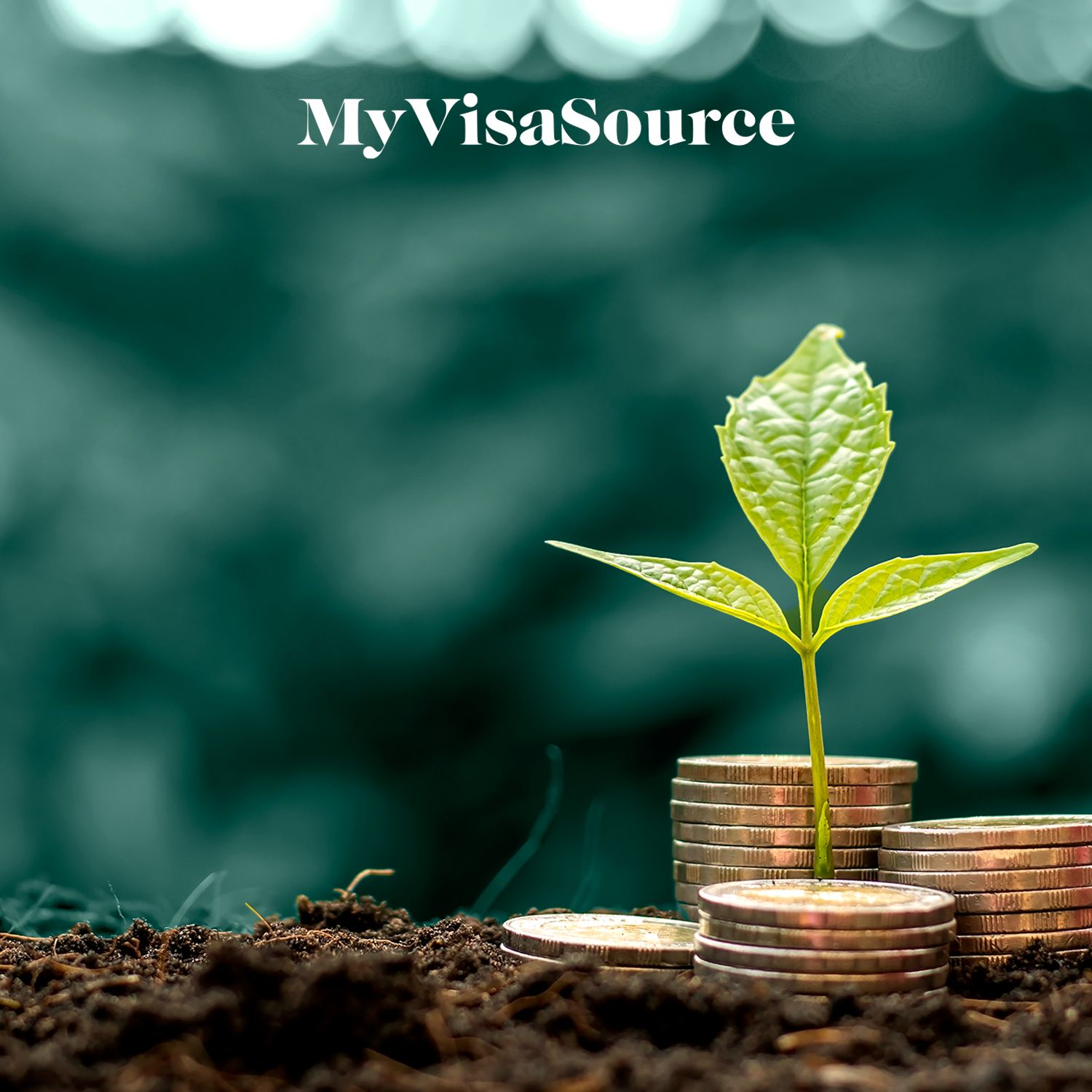 stacks of coins on the ground with some leaves growing on top my visa source